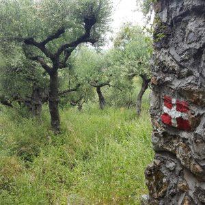 Hiking Near Kardamyli